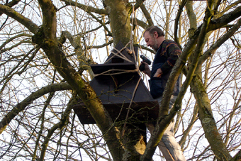 Installing owl box, DNSR footpath, March 2006 (608KB)