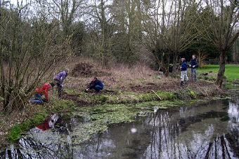 Chalk stream habitat, St Swithun's Church, January 2008 (612KB)
